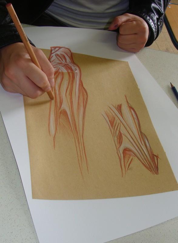 A vos crayons, atelier dessin