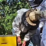 Visite de la ruche